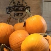 fall-pick-your-own-pumpkins-on-the-farm