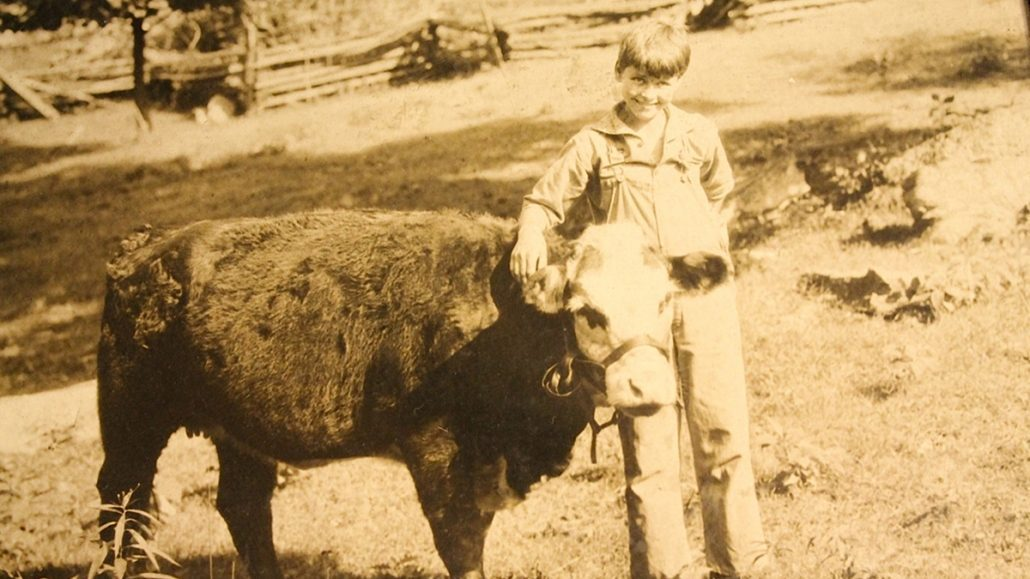 old photograph of james clarke young boy standing with cow